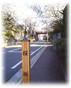Sakurazaka_img1